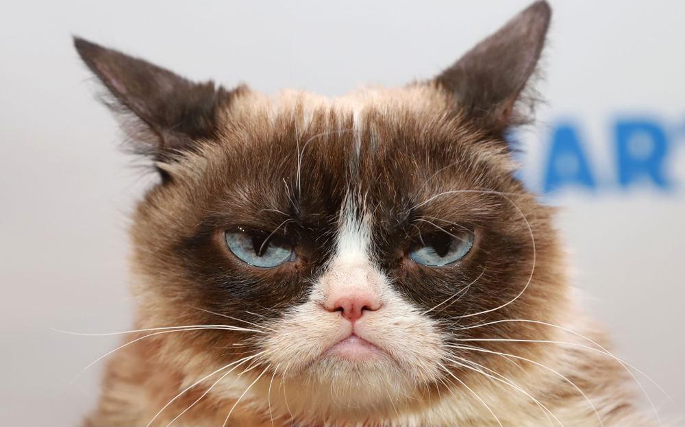 Åter en tråkig nyhet i år – Grumpy Cat har dött